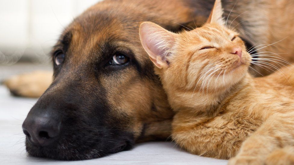 Keeping Your Cats Happy with the Help of PETstock